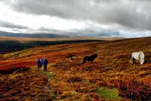 Walkers on moorland near horses